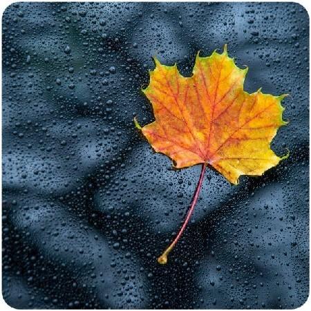 Nature Radio Rain