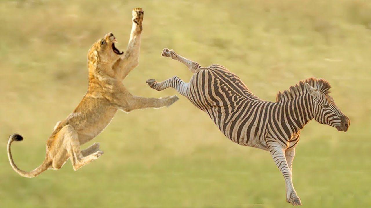 Профиль Wild Animal Tv Канал Tv