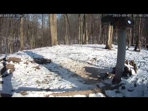 Live Deer & Wildlife